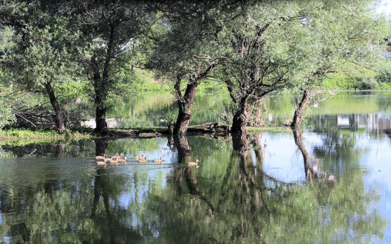 Les berges du Rhône