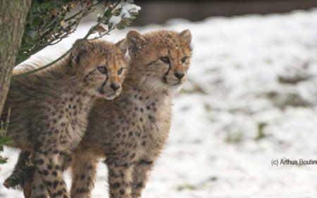 Peaugres Safari